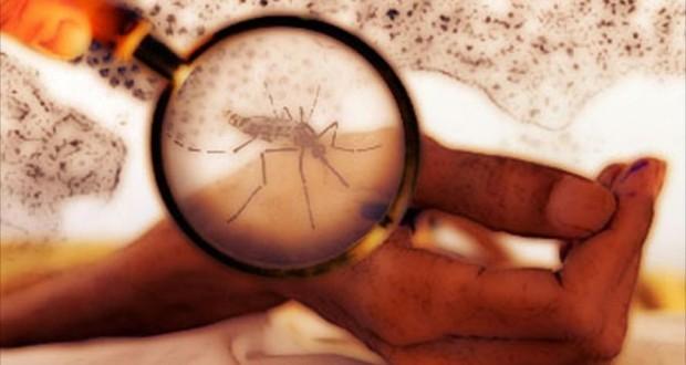 وباء-زيكا